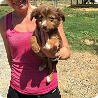 Adopt A Pet :: tanner - Groton, MA