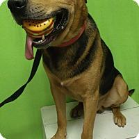Adopt A Pet :: Rex - Muskegon, MI