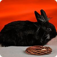Adopt A Pet :: Gwendolyn - Marietta, GA