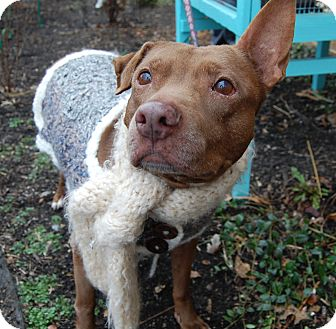 Terrier (Unknown Type, Medium) Mix Dog for adoption in Wilmington, Delaware - Coco