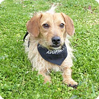 Adopt A Pet :: Slam - Mocksville, NC