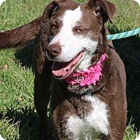 Adopt A Pet :: Jude - Pluckemin, NJ
