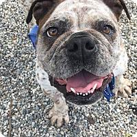 Adopt A Pet :: EllieMae - Santa Ana, CA