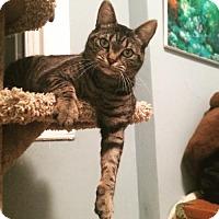 Adopt A Pet :: Jessica - Toronto, ON