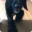 Adopt A Pet :: gaston