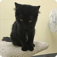 Adopt A Pet :: Cleopatra - Pasadena, CA