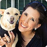 Adopt A Pet :: Stanley - Acton, CA