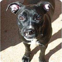 Adopt A Pet :: Lila - Nashville, TN