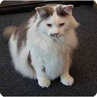 Adopt A Pet :: Sparky - San Ramon, CA