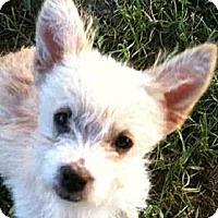 Adopt A Pet :: Poppy - Georgetown, KY