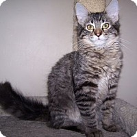 Adopt A Pet :: Blake - Colorado Springs, CO