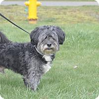 Adopt A Pet :: Jake - Tumwater, WA