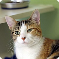 Adopt A Pet :: Namine - Chicago, IL
