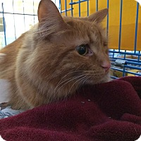 Adopt A Pet :: Kasey - West Lafayette, IN