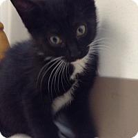 Adopt A Pet :: Penguin - Trevose, PA