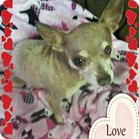 Adopt A Pet :: DUECE - Sugar Land, TX