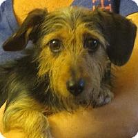 Adopt A Pet :: Annalise - Greenville, RI