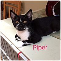 Adopt A Pet :: PIPER - Hamilton, NJ