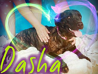 American Pit Bull Terrier Mix Dog for adoption in Odessa, Texas - Dasha