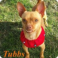 Adopt A Pet :: Simba (Tubbs) - El Cajon, CA
