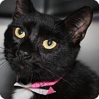 Adopt A Pet :: TONYA - Clayton, NJ