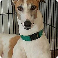 Adopt A Pet :: Don Henley - Brandon, FL