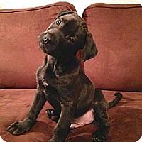 Adopt A Pet :: Teddy - Silsbee, TX