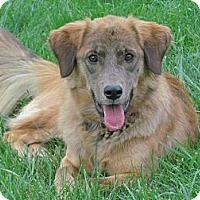 Adopt A Pet :: Mercy - Hastings, NY