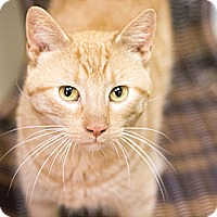 Adopt A Pet :: Reilly - Chicago, IL