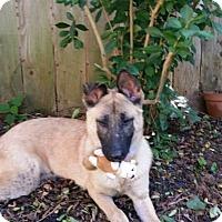 Adopt A Pet :: Vita - Kingwood, TX