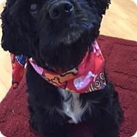 Adopt A Pet :: Angel-Adoption pending - Sacramento, CA