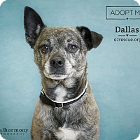 Adopt A Pet :: Dallas - Phoenix, AZ