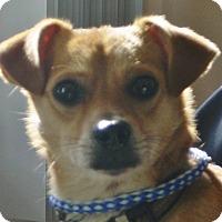 Adopt A Pet :: Dash  COURTESY POST - Chesterfield, MI