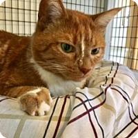 Adopt A Pet :: Cora - Victor, NY