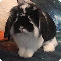Adopt A Pet :: Rabbert Paulson - Woburn, MA