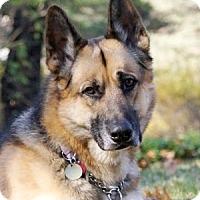 Adopt A Pet :: ZIEGEL - Wayland, MA