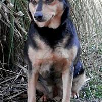 Adopt A Pet :: Lady - Tyler, TX