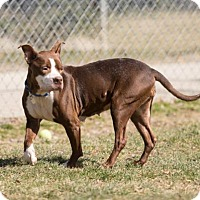 Adopt A Pet :: Sherry - Howell, MI