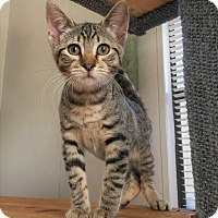 Adopt A Pet :: Bastian - Savannah, GA