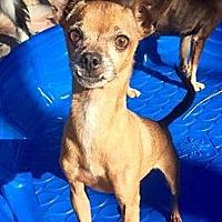 Adopt A Pet :: Sparky (BH) - Santa Ana, CA