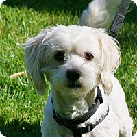 Adopt A Pet :: Travis - Carlsbad, CA
