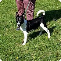 Adopt A Pet :: Ozzie - Cameron, MO