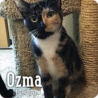 Adopt A Pet :: Ozma - Merrifield, VA