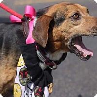 Adopt A Pet :: Journey - Plainfield, IL