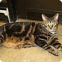 Adopt A Pet :: Tugger - Warminster, PA
