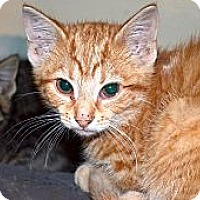 Adopt A Pet :: Gizzy - Xenia, OH