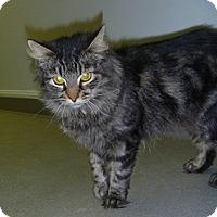 Adopt A Pet :: Delia - Hamburg, NY