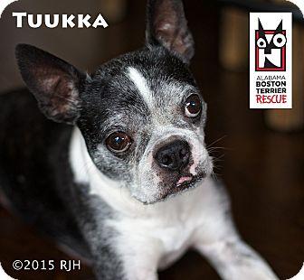 Boston Terrier Mix Dog for adoption in Courtland, Alabama - Tuukka