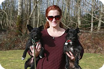 Terrier (Unknown Type, Small) Mix Dog for adoption in Surrey, British Columbia - Artie