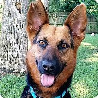 Adopt A Pet :: Stella - Ormond Beach, FL